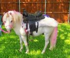 Pretty Awesome Pony!